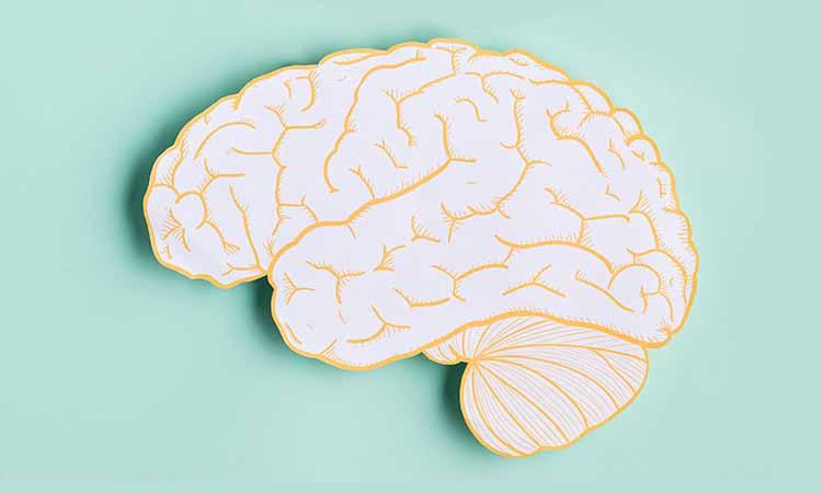 Desenho de um cérebro da cor amarelo com um fundo verde claro
