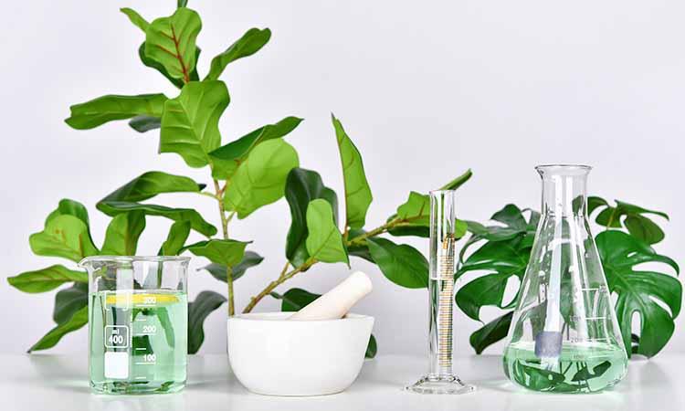 Imagem com diversas plantas verdes, um pote branco e vidros com um liquido verde dentro